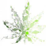 asv-colloque-cannabinoides-22oct14.jpg.6e5341f01cb960de6343d747418ec8b5